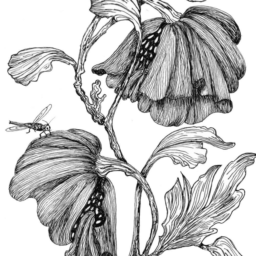 1024x1024 Pen And Ink Drawings Of Flowers Images For Gt Pen And Ink Drawings
