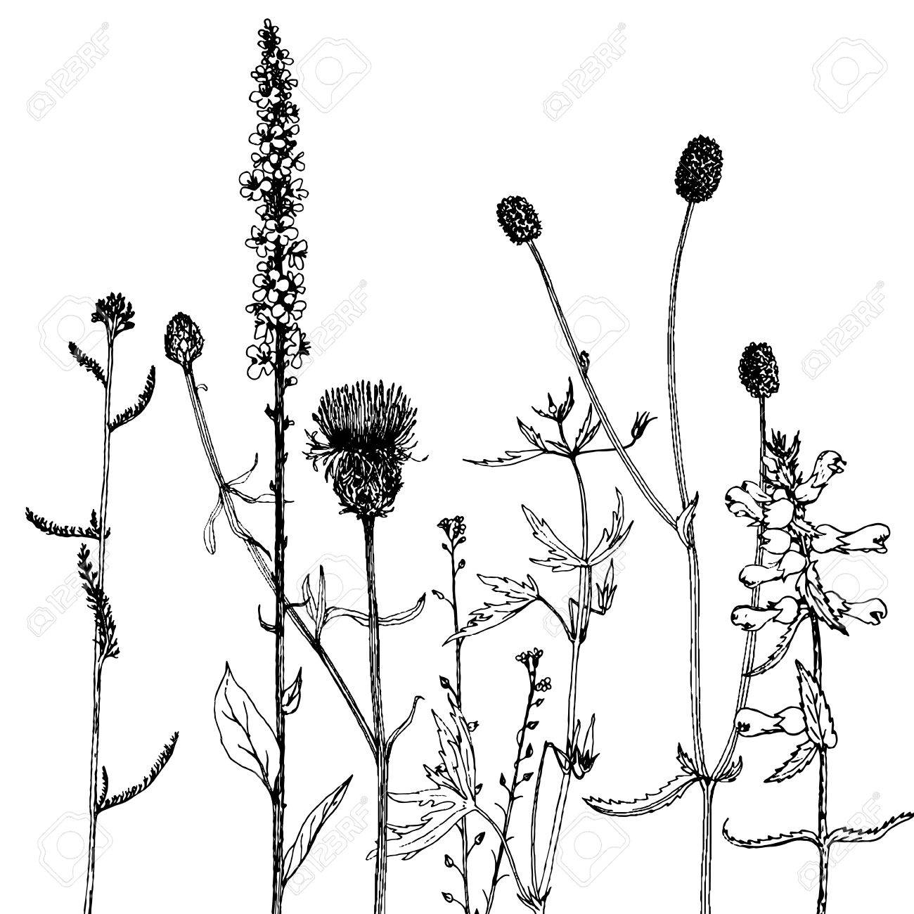 1300x1300 Vector Background With Ink Drawing Wild Plants, Herbs And Flowers