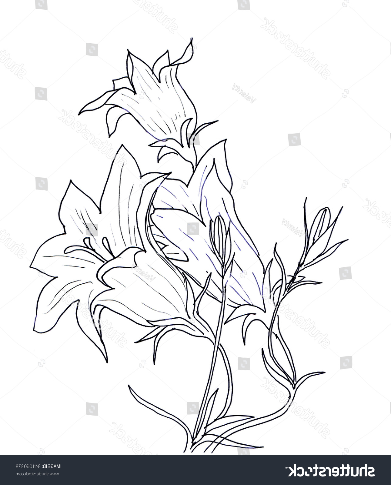 1290x1600 Art Drawing Flowers Bells In Hd Hand Ink Drawing Bell Flower Card