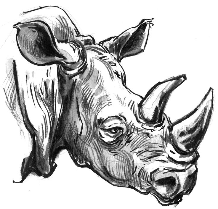 736x703 428 Best Animal Drawing Tutorials Amp Painting Images