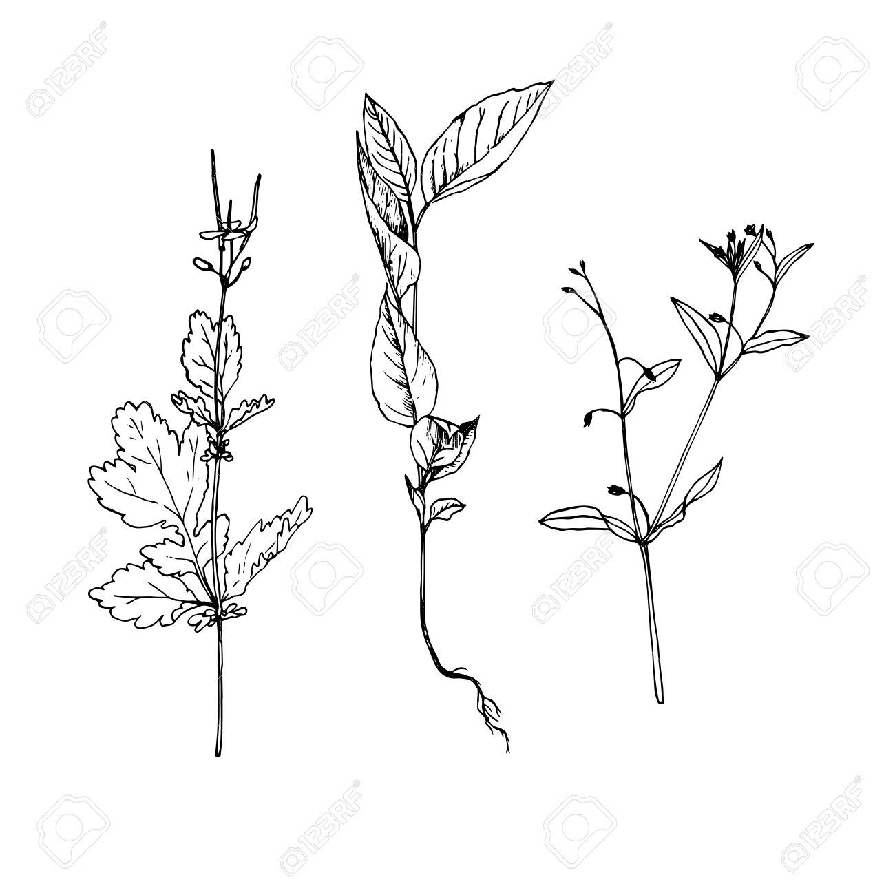 1300x1300 Set Of Ink Drawing Wild Flowers With Leaves, Line Drawing Wild