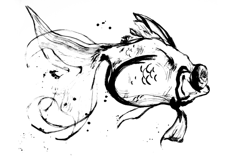 800x537 Amy Holliday Illustration Fish Studies Exploring Movement