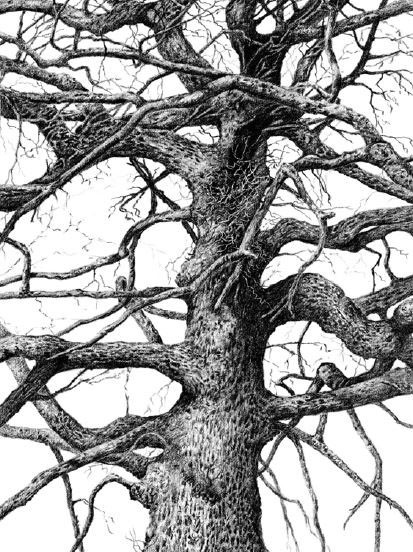 413x552 Pin By Willie Nel On Drawing Trees Drawing Trees