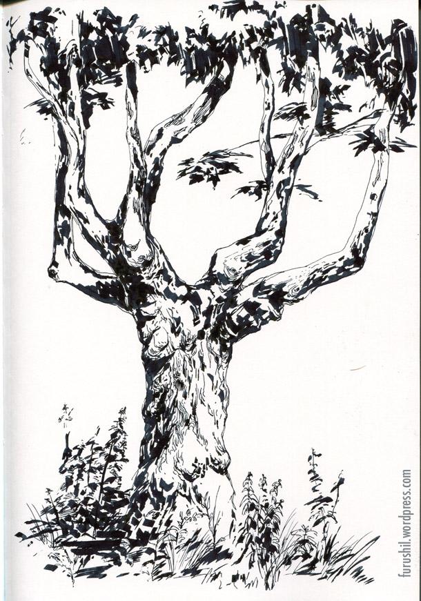 610x871 Tree Sketches Paul Schwarz Artlog
