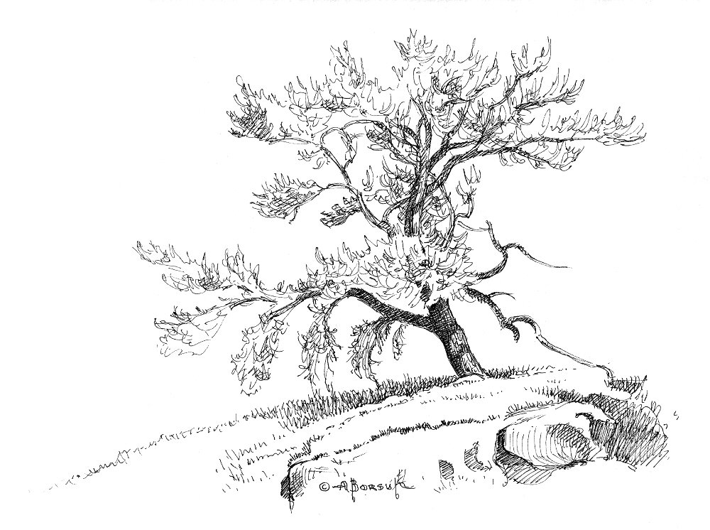 1000x746 Gnarled Old Tree, In Alex Borsuk's Pen And Ink Drawings Comic Art