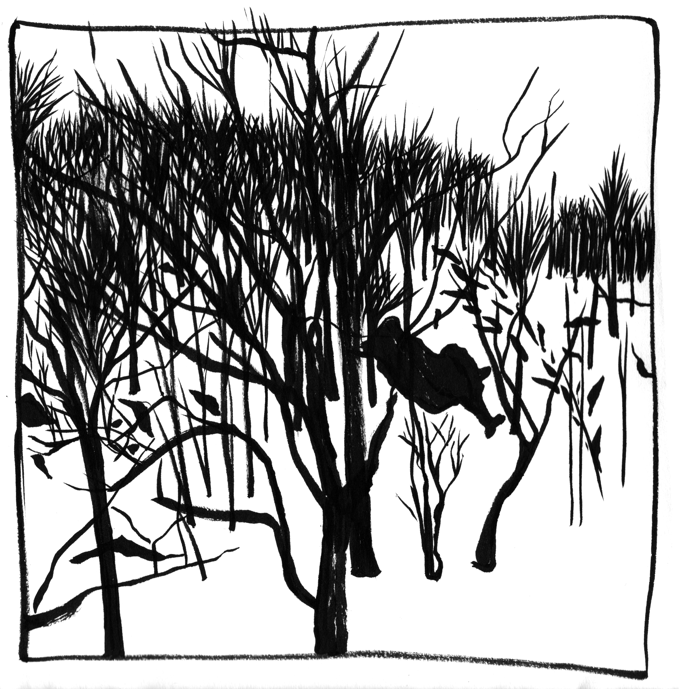 2261x2290 Ink Sketches Inwood Hill Park In Snow Marion Vitus