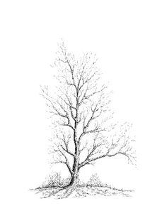 236x314 Der Baum The Tree 020 Tusche Indian Ink Fineliner 0.05, 0.1