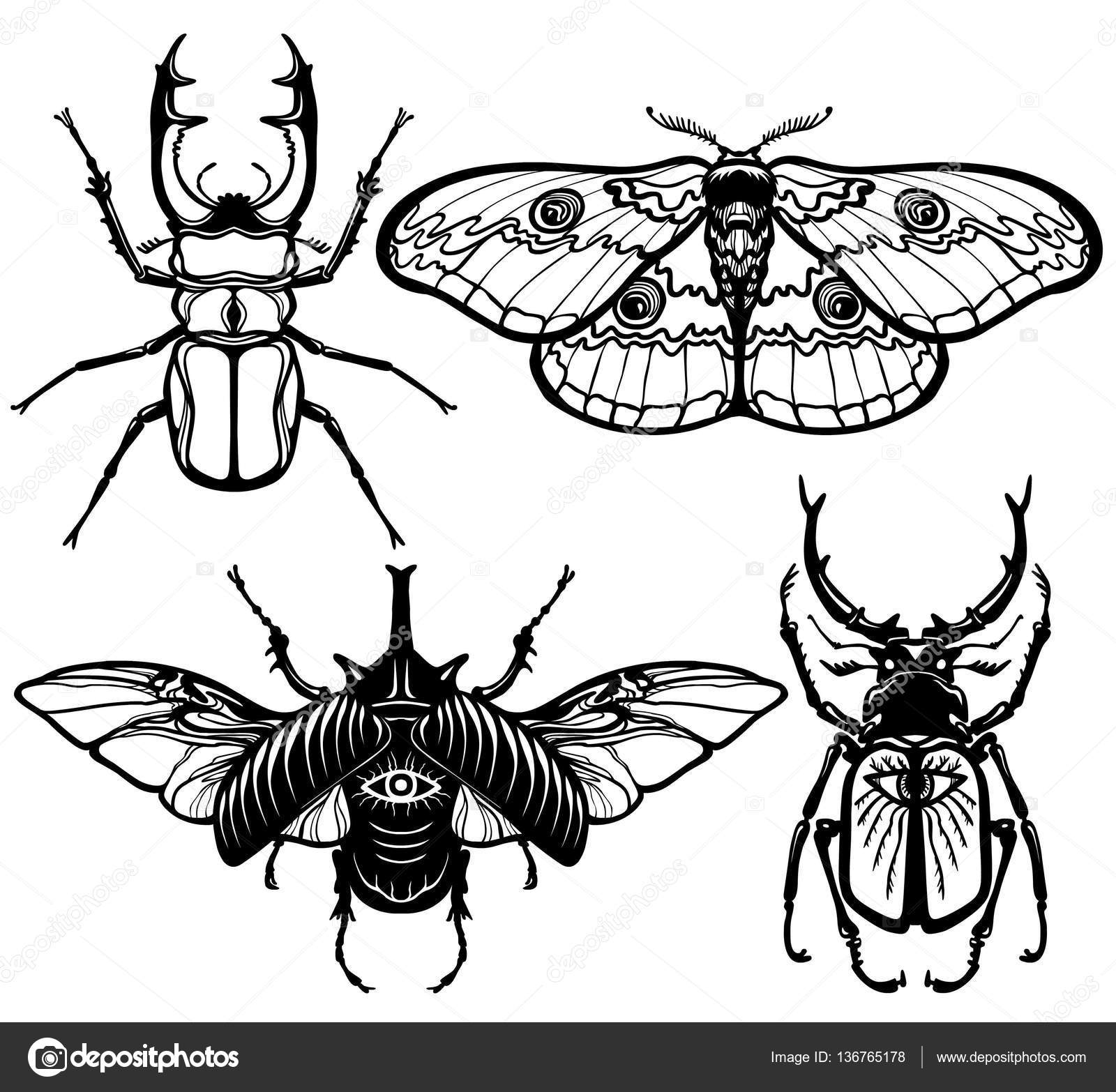 1600x1566 Collection Of Images Of Insects Bugs And Moth. The Linear Drawing