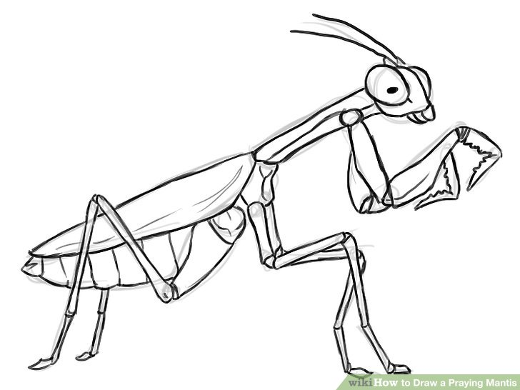 728x546 How To Draw A Praying Mantis 12 Steps (With Pictures)