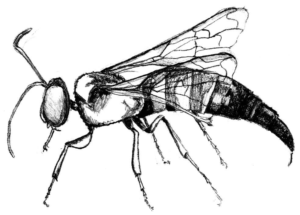 An entomology lesson on larvae metamorphosis - 1 2