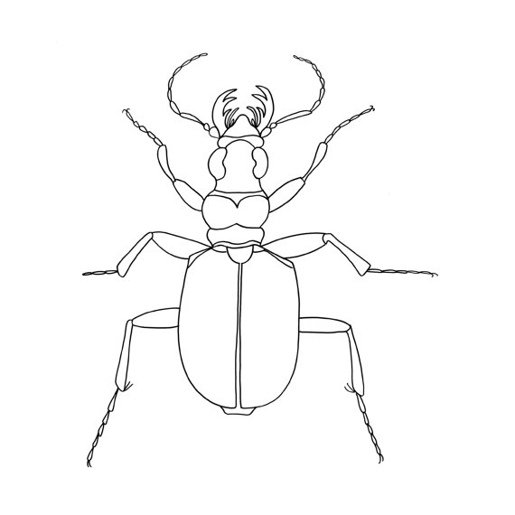 570x570 Stag Beetle Drawing