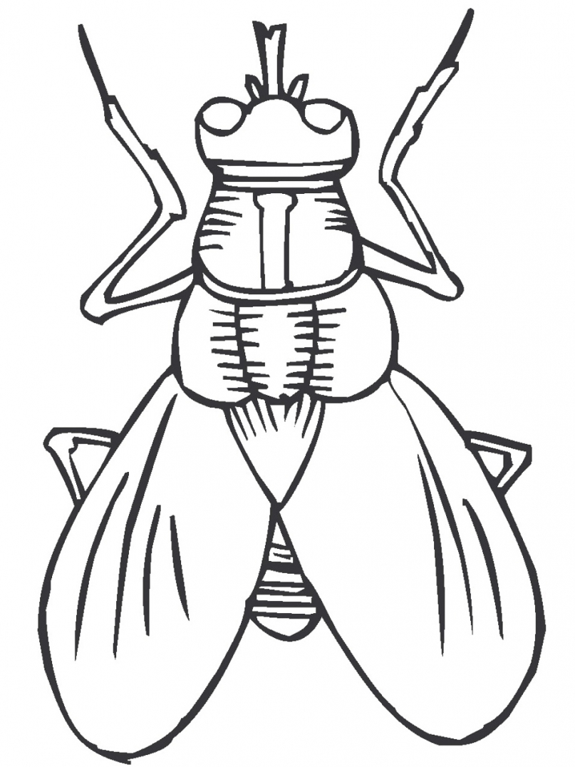 807x1076 Free Printable Bug Coloring Pages For Kids Throughout Coloring