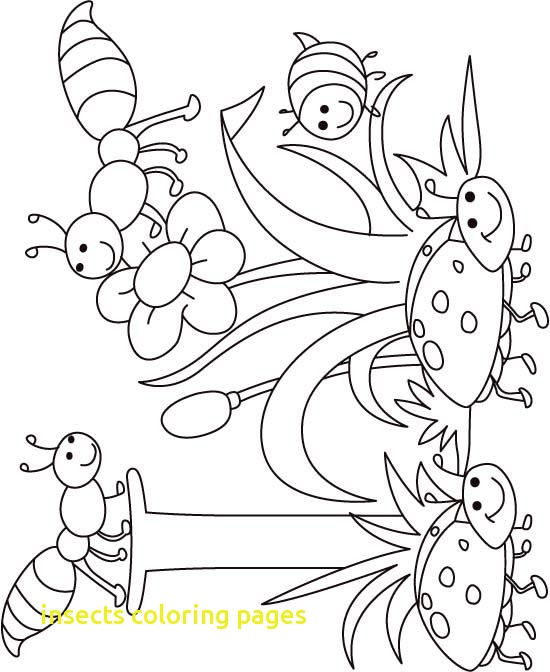 550x672 Insects Coloring Pages With Draw Insects Coloring Pages New