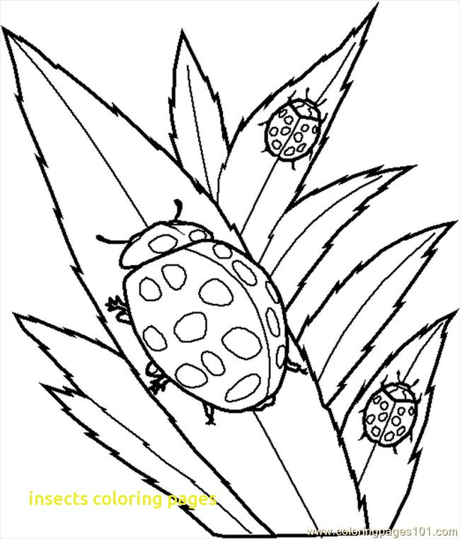 650x761 Insects Coloring Pages With Insect Coloring Pages For Kids Many