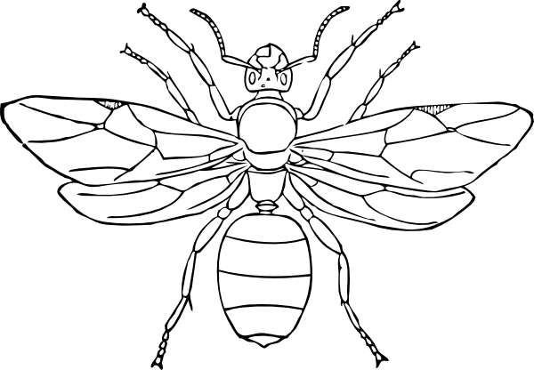 600x416 popular insects coloring pages nice coloring p - Insect Coloring Page