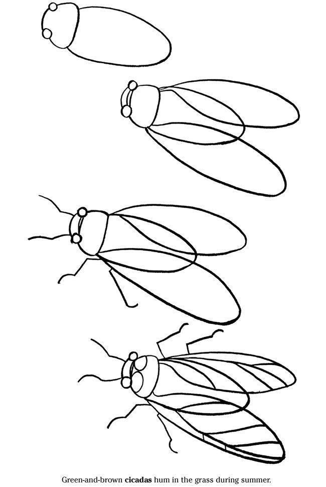 650x970 How To Draw A Cicada Step By Step (Art Lesson, Kids) Desenho
