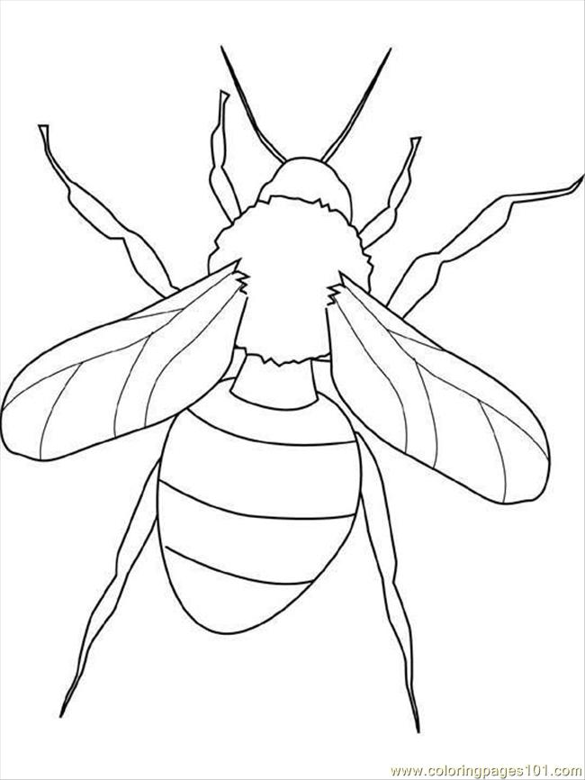 650x866 Best Photos Of Printable Insect Coloring Pages