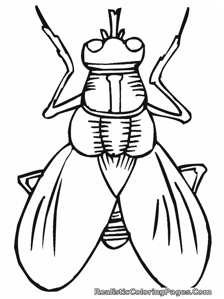 Awesome Insect Coloring Book Images - New Coloring Pages - yousuggest.us
