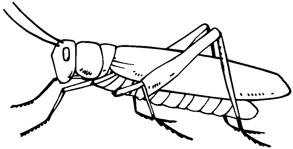 947x484 Grasshopper Drawing Black White Black And White Cartoon