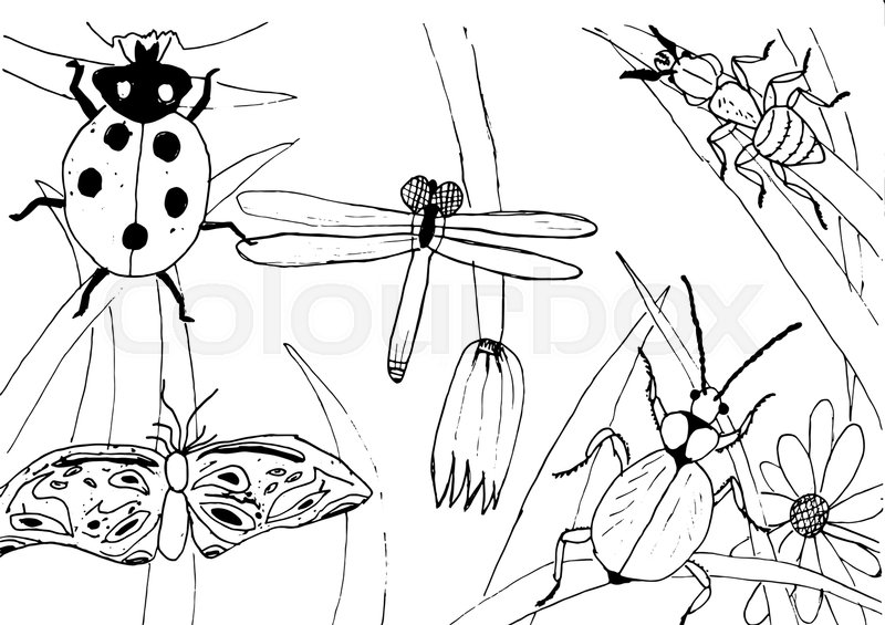 800x565 Kid Style Ink Drawing Meadow Objects, Plants, Flowers, Grass