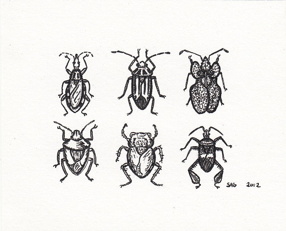570x460 Items Similar To Mini True Bugs Pen And Ink Drawing
