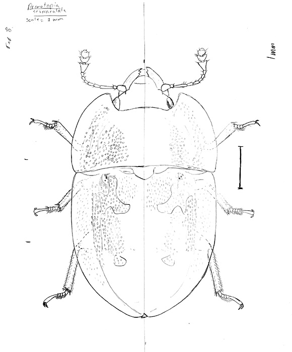 580x700 Scientific Illustration Of Insects (According To Joe Macgown)