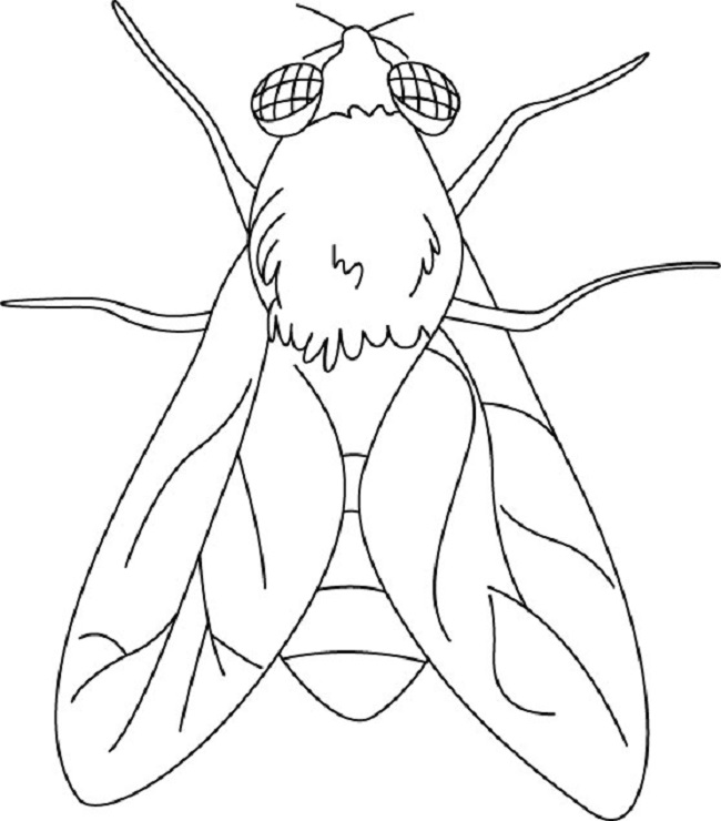 650x740 Flying Insects Coloring Page Coloring Pages Flying