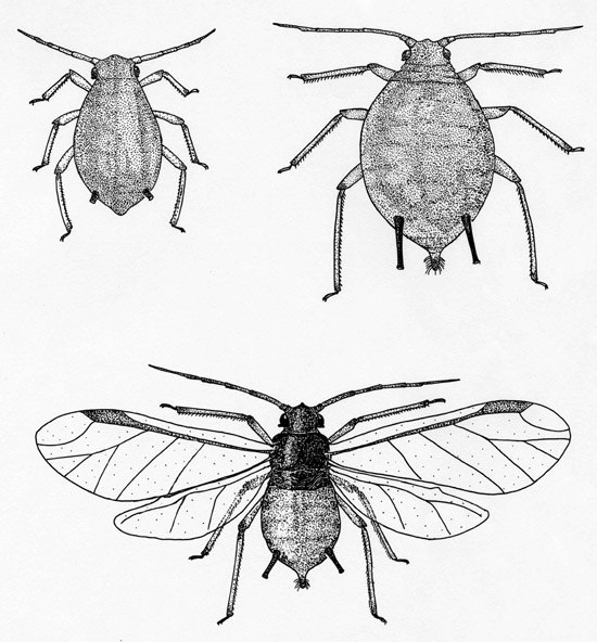 550x592 Scientific Drawings