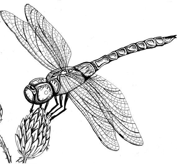 insects pencil drawing at getdrawings com
