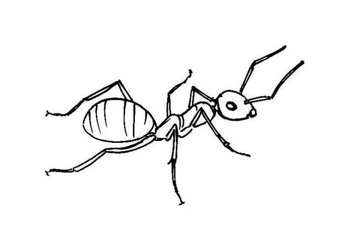 703x501 Inspirational Drawing Of An Ant 83 About Remodel Seasonal