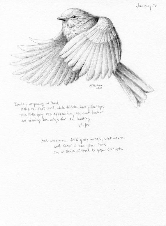 570x776 Bird Drawing Bird Sketch Nature Journal Inspirational