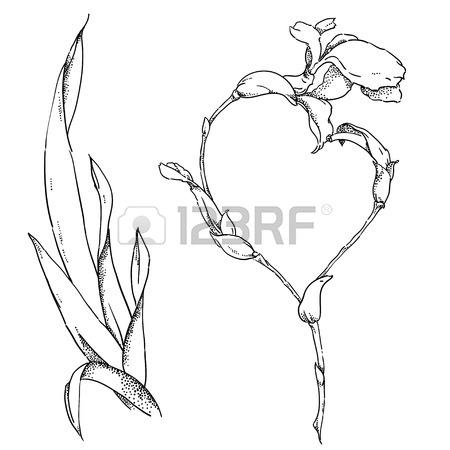 450x450 Hand Drawn Botanical Illustration Of Geranium With Flowers, Buds