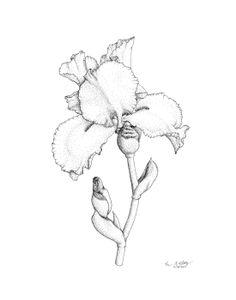 236x300 Iris' Garden On Behance Drawing Amp Illustration
