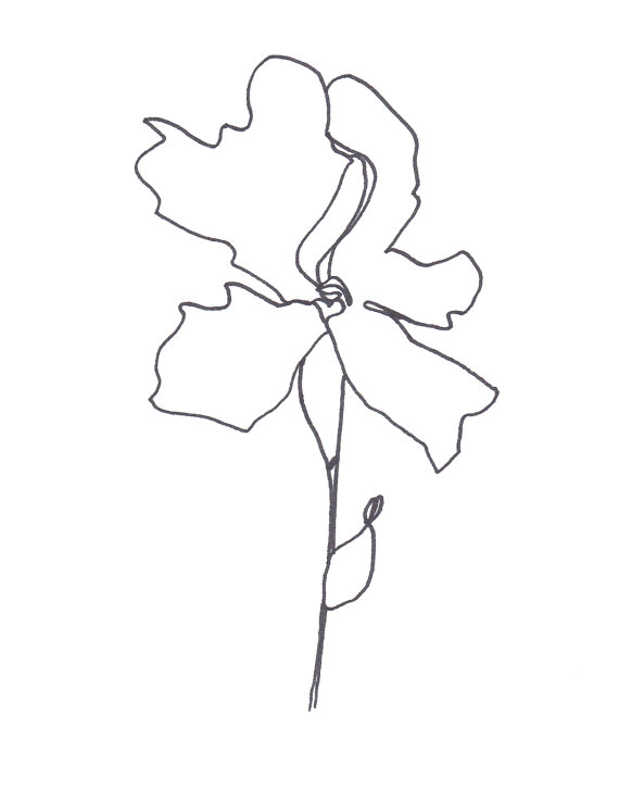 570x725 Original Abstract Minimalist Drawing Blume Series Botanical