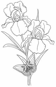 236x363 Pix For Gt Iris Drawing Applique Iris, Drawings