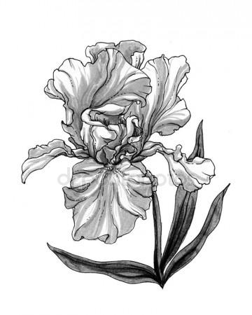 360x450 Botanical Illustration Stock Photos, Royalty Free Botanical