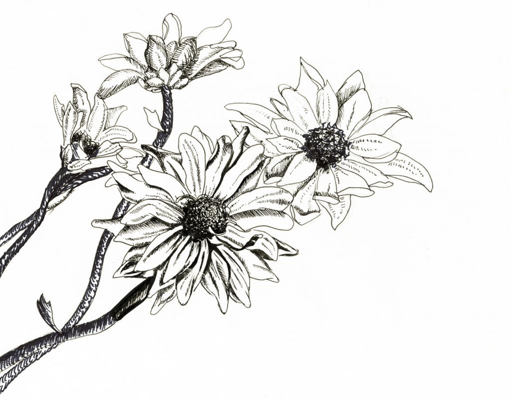 1024x804 Flower Ink Drawing Original Ink Drawing, Iris Botanical Drawing