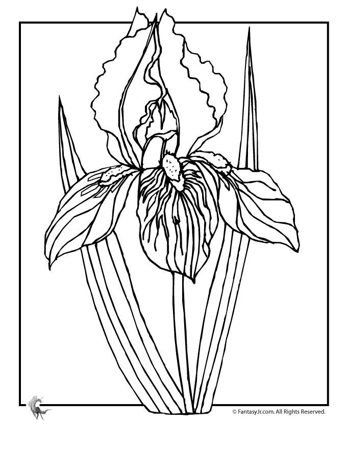 680x880 Iris Coloring Page
