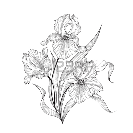 450x450 5,798 Iris Flower Stock Illustrations, Cliparts And Royalty Free