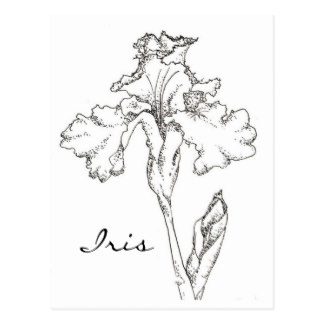324x324 Flower Drawing Postcards Zazzle Uk