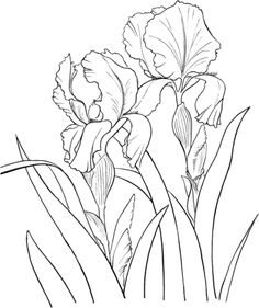 236x281 How To Draw An Iris In 5 Steps Iris, Outlines And Flower