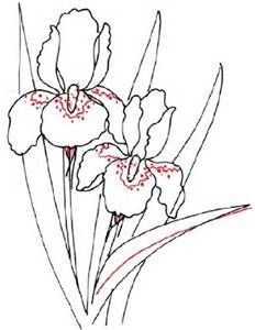 232x300 238 Best Line Drawings Of Irises Images On Drawing