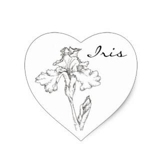 324x324 Iris Flower Drawing Gifts On Zazzle