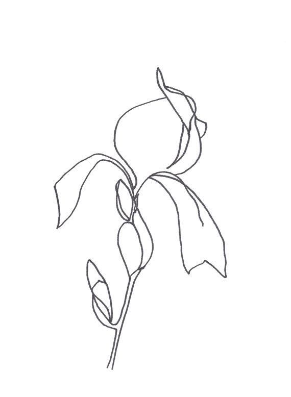 570x778 Original Abstract Minimalist Drawing Original Botanical By Artseas