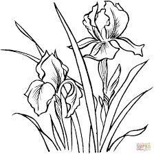 224x225 Resultado De Imagen Para Dibujos De Iris Dibujos