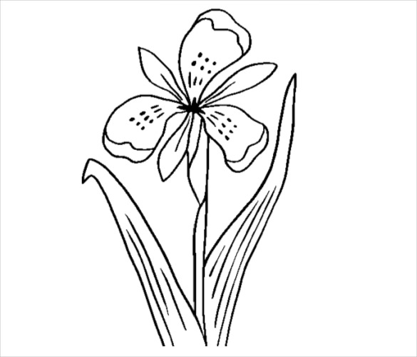 585x500 Flower Coloring Pages Free Psd, Ai, Vector Eps Format