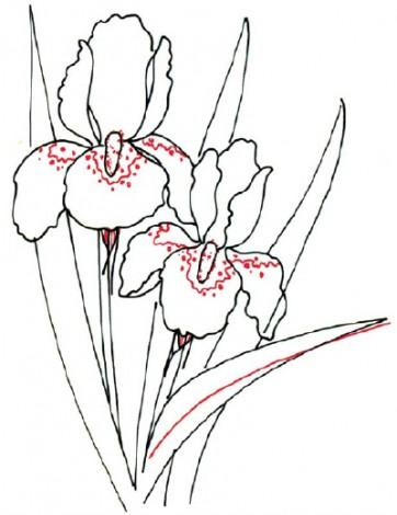 362x470 How To Draw An Iris Flower