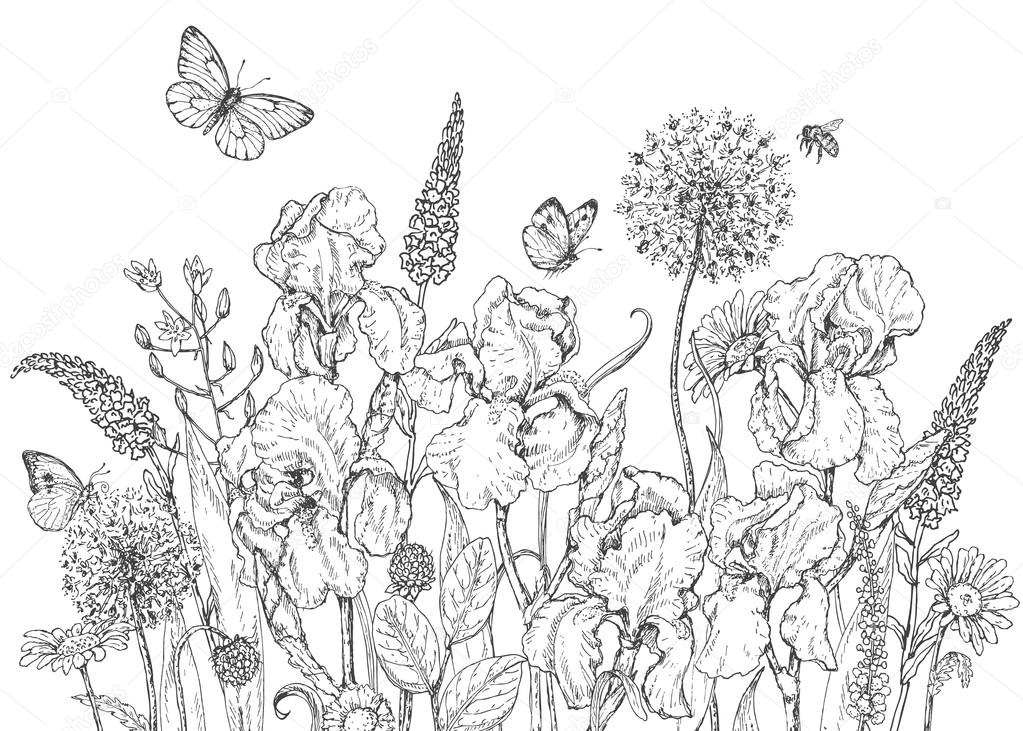 1023x731 Iris, Wild Flowers And Insects Sketch Stock Vector Valiva