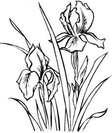 230x272 Pin By Keara Battenfield On Drawing Iris, Drawings
