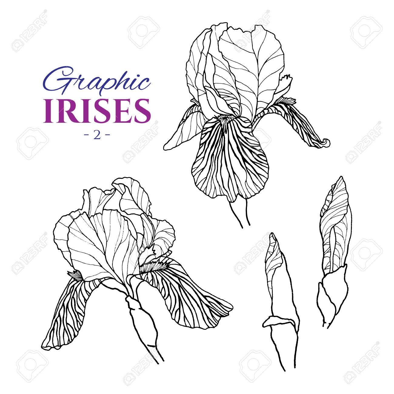 1300x1300 Graphic Illustration Of Irises From Different Angles, Set Part